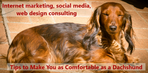 Internet Marketing, social media, web design consulting that makes you as comfortable as a dachshund!
